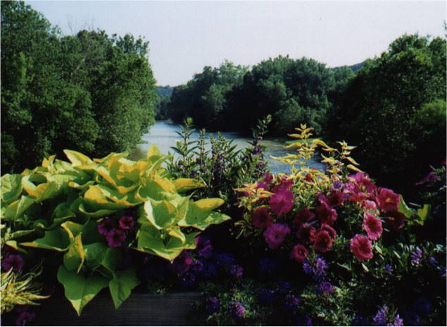 Flowers on a bridge overlooking a river